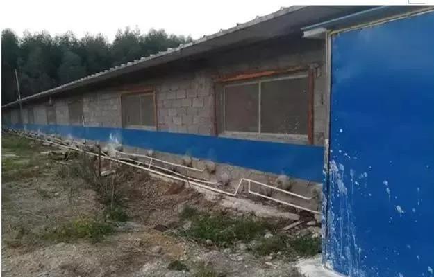 """生猪复养在行动,广西猪场进行""""铁桶式""""升级改造"""