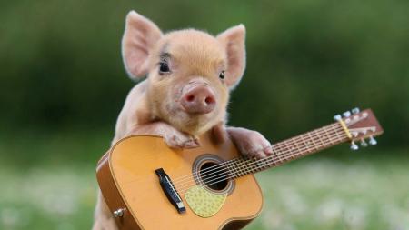 12月5日全国生猪价格土杂猪报价表,土杂猪价格继续上涨幅度有限