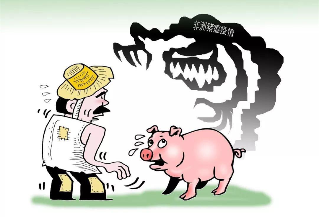 非洲猪瘟造成的经济后果