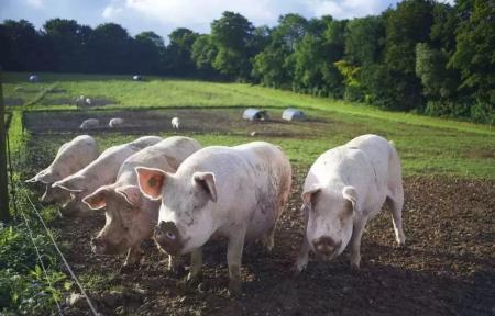 12月6日全国生猪价格外三元报价表,北方部分地区生猪价格跌落转上涨