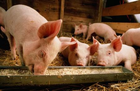 农业农村部印发加快生猪生产恢复发展三年行动方案通知,定年底前生猪存栏止跌回升目标