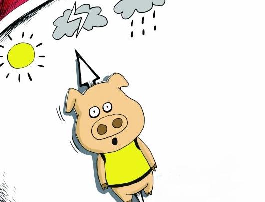 12月7日全国生猪价格外三元报价表,12月份生猪价格首次出现下跌