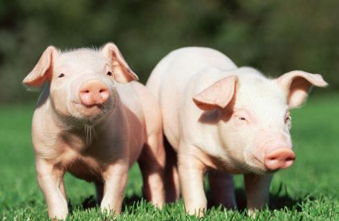 最新消息!兰州兽医研究所布鲁氏菌阳性人数增至96人