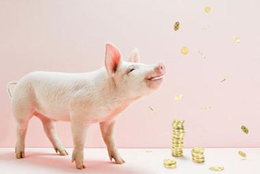 猪价涨跌两难,后市猪价三步走