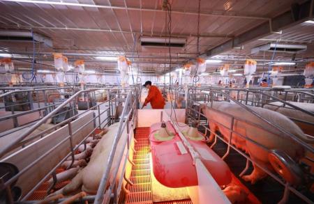 四川大型养殖集团积极扩大生猪产能 规模养殖场将迎来集中建设期