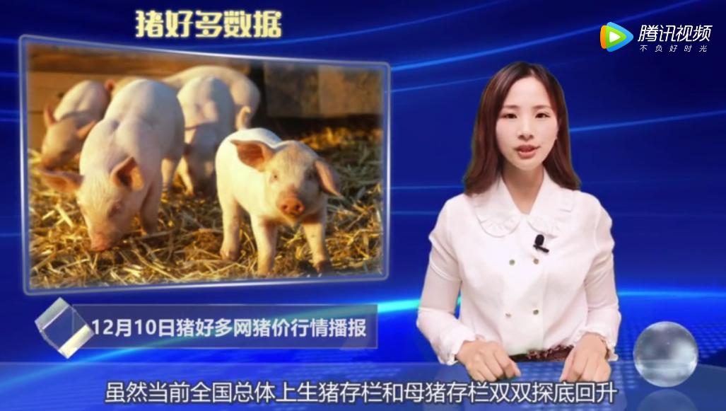 12月10日养猪行情分析:生猪存栏和母猪存栏双双探底回升,猪肉供应仍偏紧
