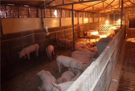 猪价下跌不可怕,可怕的是散户要退场?