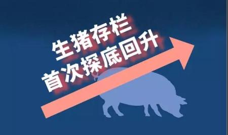 猪肉降价了,能否稳得住?!