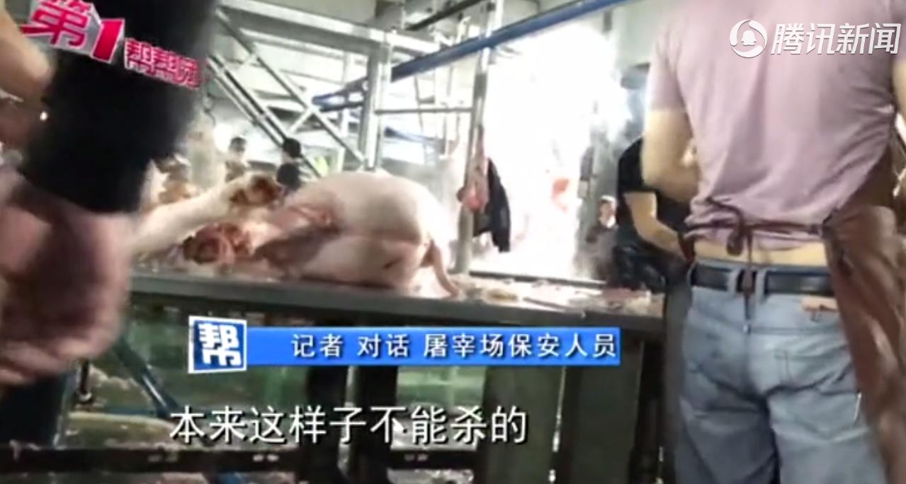 """问题屠宰场:不检疫,杀""""问题""""猪还注水,已被相关部门介入调查......"""