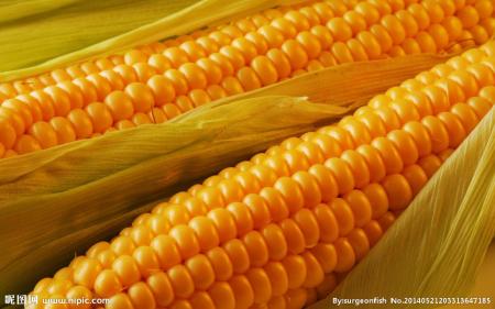 12月17日全国玉米价格行情表,西南地区玉米价格同比上月上涨明显
