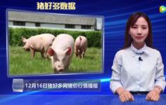 生猪价格行情分析:北方猪价强势上涨,会引起全国大涨吗?
