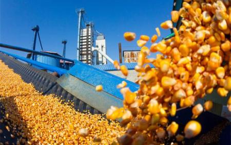 巴西玉米库存紧张,公司已经进口玉米