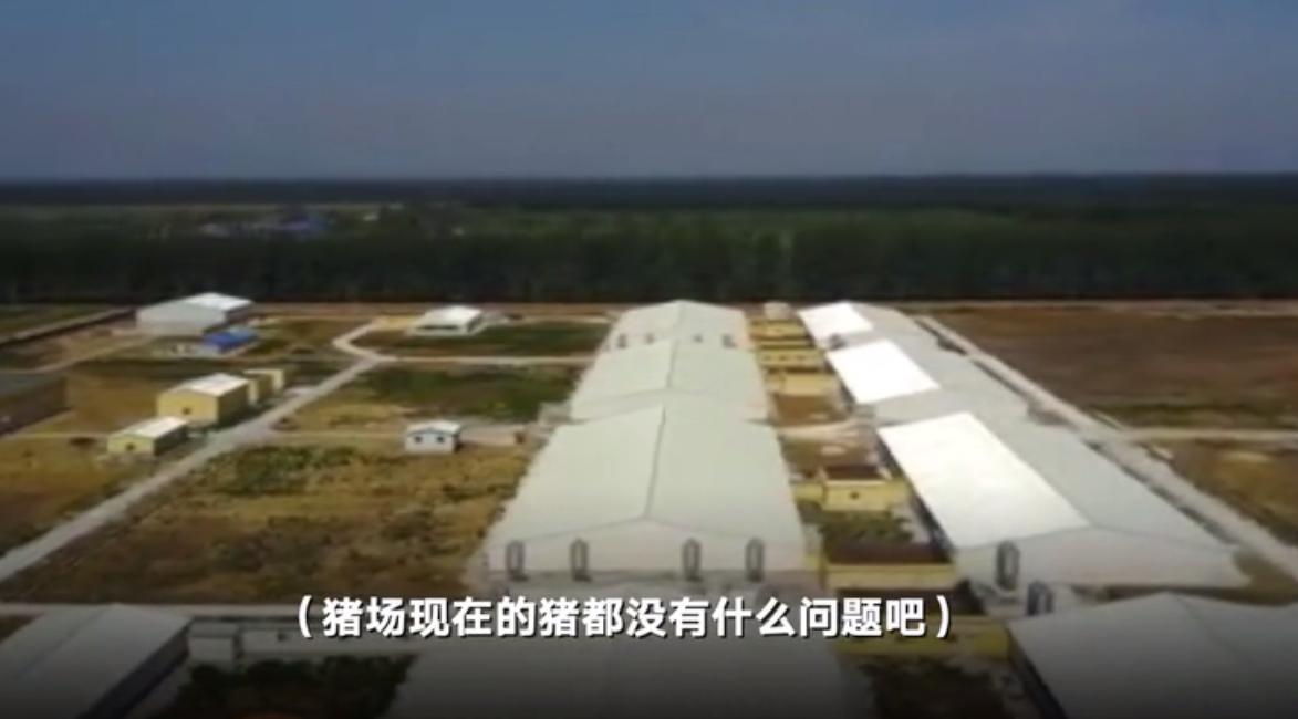黑龙江一猪场架设干扰器致航班信号丢失 回应:怕无人机投放病毒