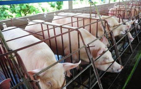 12月22日全国生猪价格内三元报价表,全国内三元生猪价格呈现跌涨调整态势