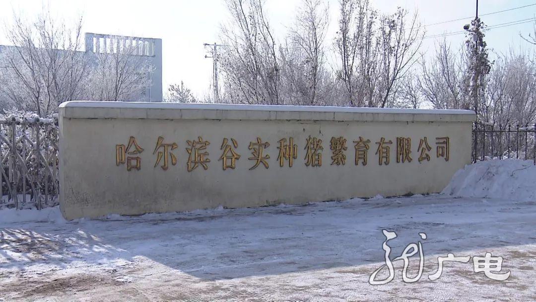 """黑龙江:帮老百姓稳住""""菜篮子"""""""