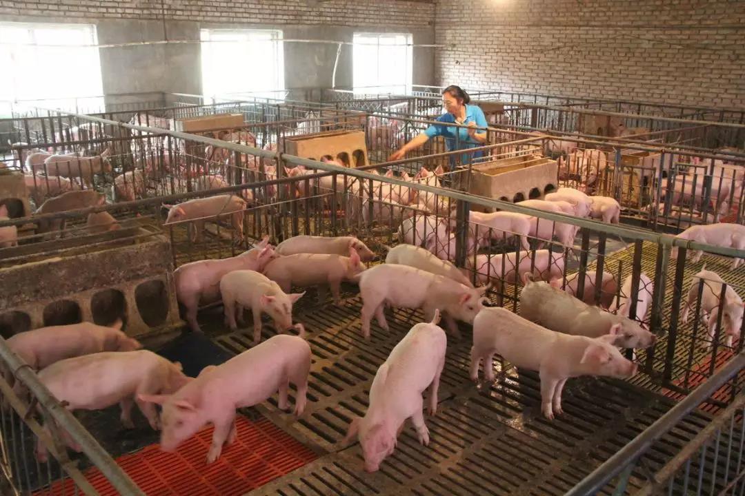 高岩:关于冬季猪舍通风的几点看法