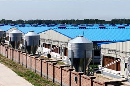 规模猪场产能利用率完全取决于现场管理