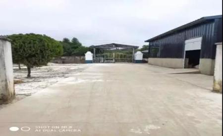 上饶市万年县谭老板猪场