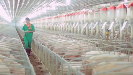 保供应、稳价格,扬州加快建设五个生猪养殖集聚区