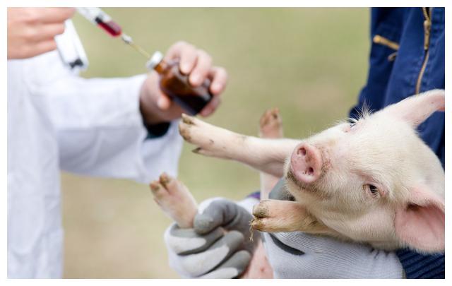 """以案说法:A公司涉足""""非洲猪瘟""""防治疫苗监管案例评析"""
