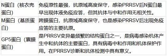 PRRSV主要蛋白的作用