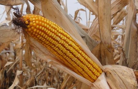 崭新的一年再出发,玉米价格是否能上涨