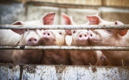 养猪的大北农迎三涨停,老板身家三天涨20亿