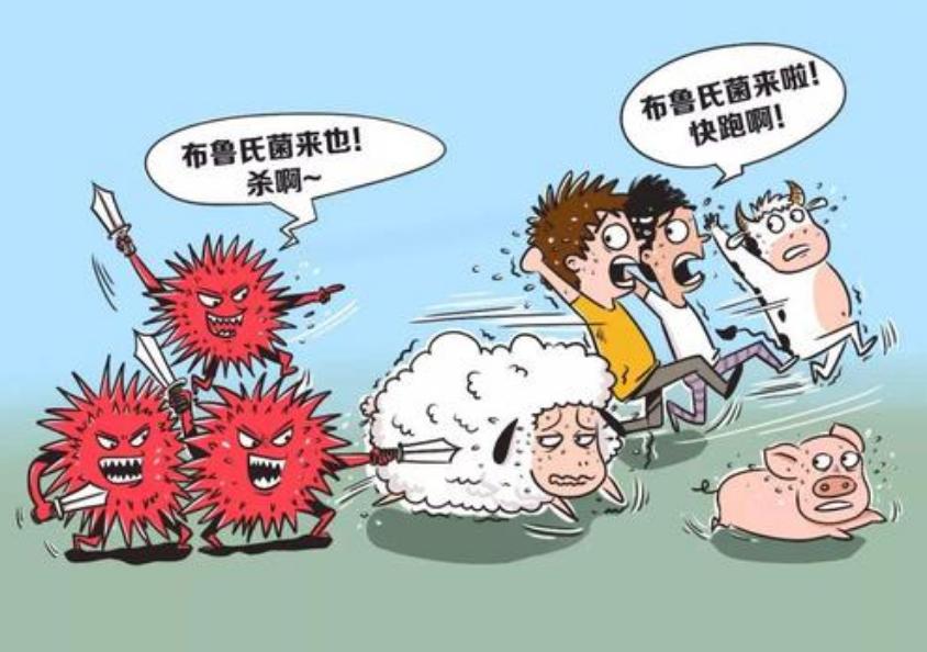 详解猪布鲁氏菌病的流行与防控