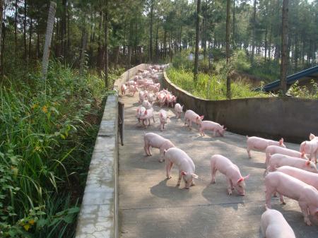 1月2日全国生猪价格内三元报价表,猪价上涨已稳定为主,受政策调控等多方利空因素局部窄幅调整!