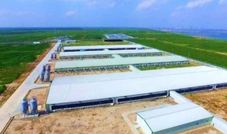 去年四川省保障生猪用地超2.8888万亩,生猪年产能新增超200万头