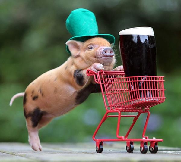 1月6日全国生猪价格,小幅度上涨,总体依然保持在高位运行!