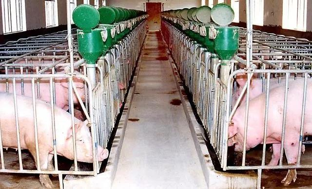 冬季疾病高发,五步建立猪场综合性防疫体系