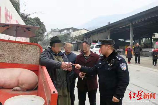 道路颠簸致猪掉落 被人捡走卖三千元警方介入追回