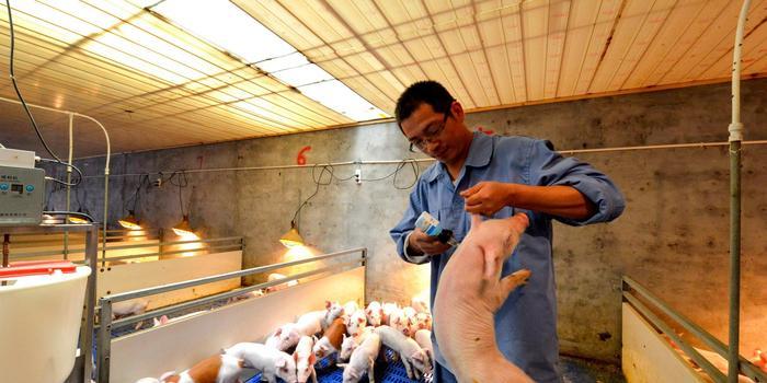 温氏与牧原,养猪行业不同模式下的代表
