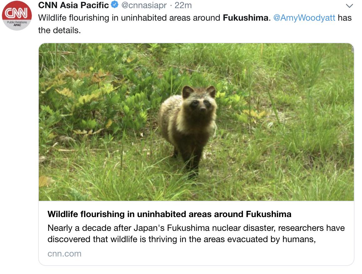 日本福岛核泄漏近十年后:浣熊、野猪等野生动物繁衍生息