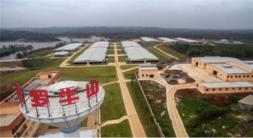 罗牛山发力生猪养殖,拟定增募资近25亿扩产