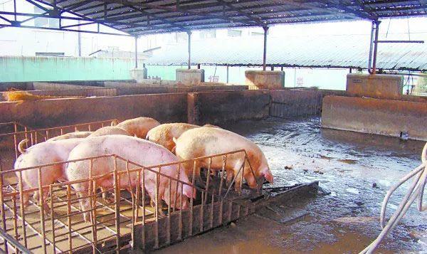 俩村民非法屠宰生猪,构成非法经营罪获刑