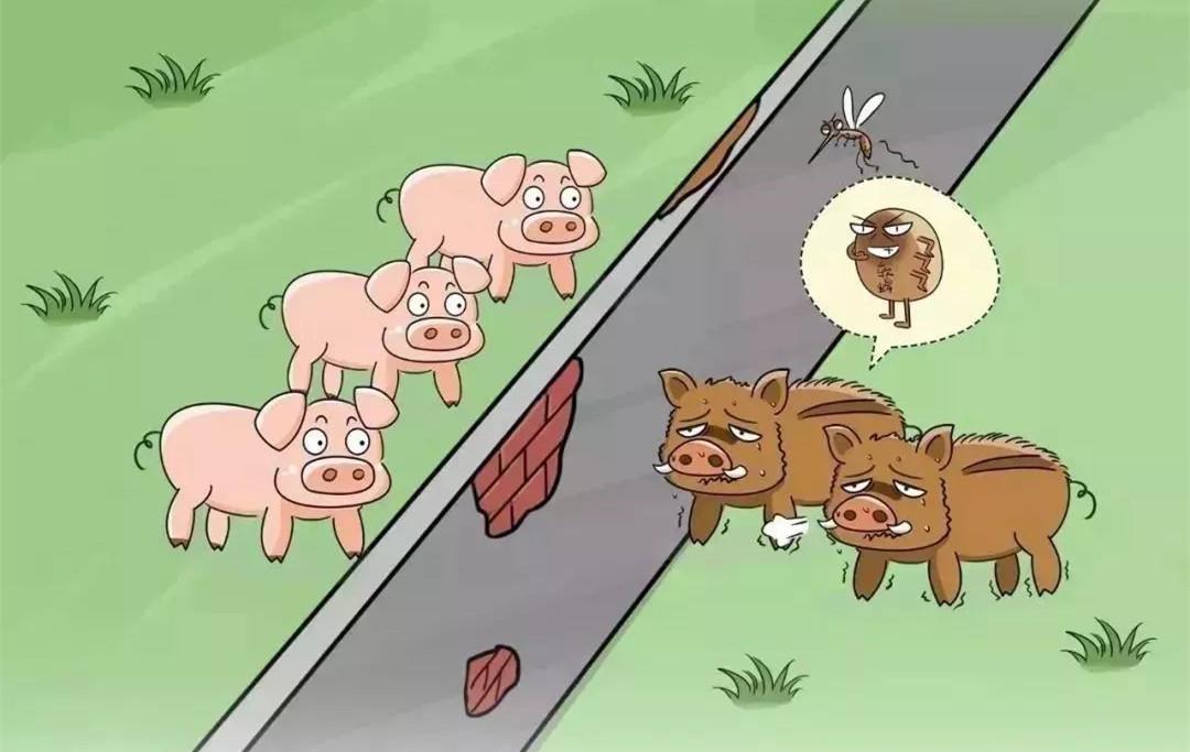 国际非洲猪瘟疫情动态:波兰非洲猪瘟逼近德国猪圈