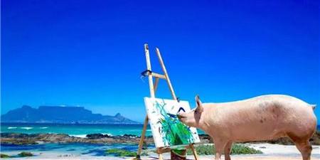 1月12日全国各地区种猪价格报价表,今日全国种猪价格保持平稳态势运行!
