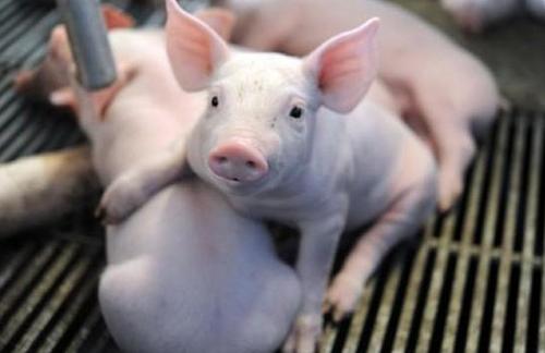 重磅!61家湖南省级畜禽养殖标准化示范场名单公示