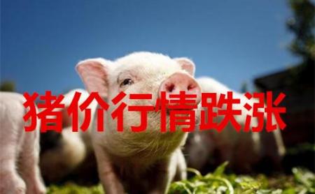 1月14日全国生猪价格,火力全开,26省猪价飘红!