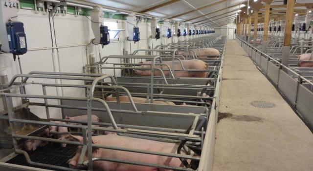 猪场产房管理:丹育产房管理手册(连载一)