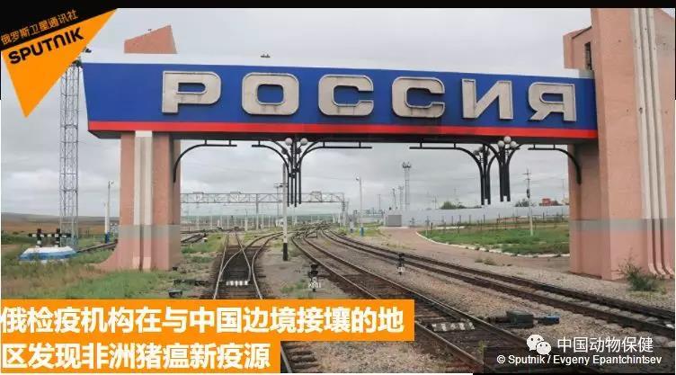 俄检疫机构在与中国边境接壤的地区发现非洲猪瘟新疫源
