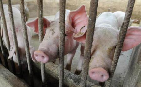 1月17日全国生猪价格内三元报价表,今日内三元延续昨天下跌的局面,但是幅度明显减缓!