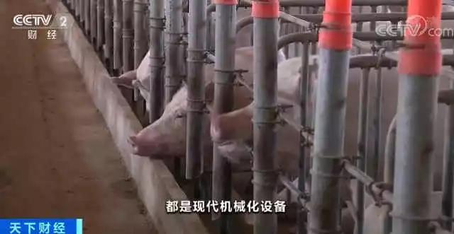 广西、广东等地陆续出现楼房式猪场!养户:省地又省心