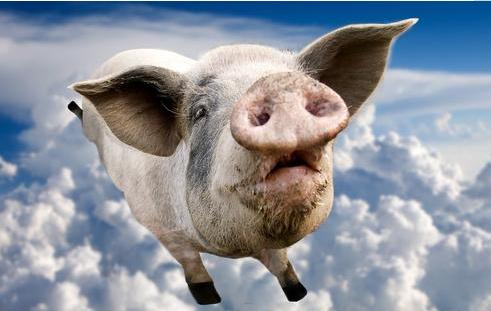 未来3年的生猪价格走势如何?看完心里有数了!