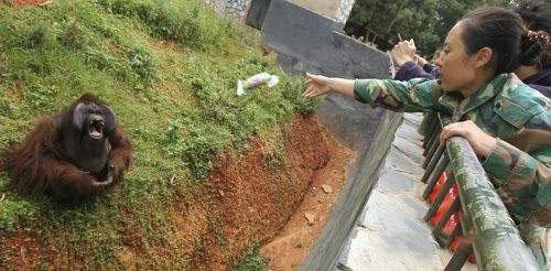 甘肃:摸清全省人工饲养野生动物底数,强化疫源检测防控