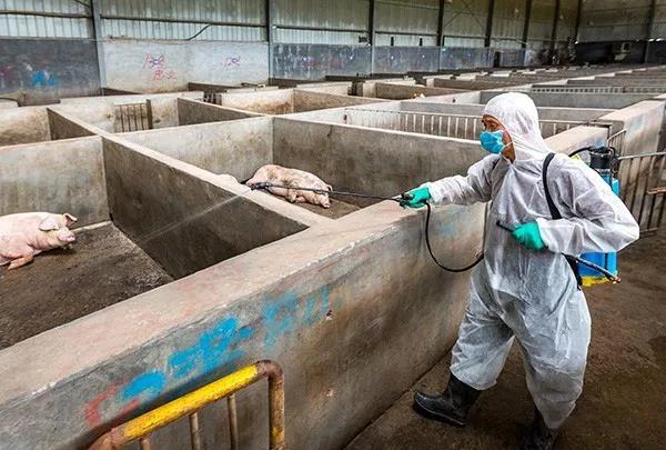 低温环境下猪场如何选择消毒剂,做到有效消毒?