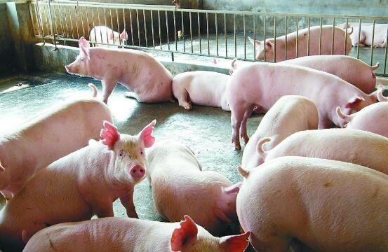 """黑龙江展现""""大厨房""""实力:肉蛋奶自给充足,每天外销京沪猪肉700吨"""