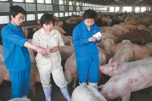 """养殖业的""""战疫"""" — 新冠肺炎疫情或将延长本轮""""超级周期"""""""